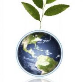 Green economy cresce anche in Italia