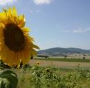 Centrale a biomassa a Borgosesia