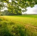 In Olanda si ricava energia elettrica dall'erba