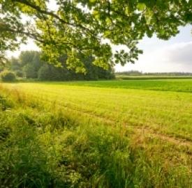 Energia pulita dall'erba