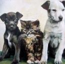 Finanziamenti a fondo perduto per aprire una pensione per animali