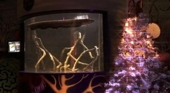 L'anguilla mentre alimenta l'albero di Natale