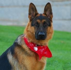 Assicurazione per gli animali domestici