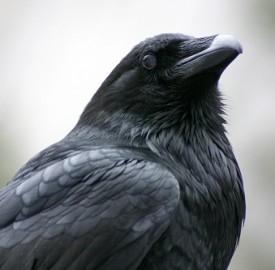 """""""Il corvo"""" è una delle opere più famose di Poe"""