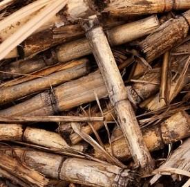 Le biomasse, una certezza per il futuro