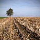 Ambiente, nasce il primo impianto per la produzione di bioidrogeno da biomasse agricole