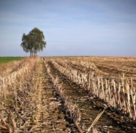 Bioidrogeno da biomasse agricole