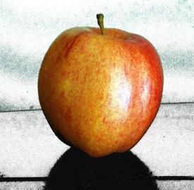 Rumors iPhone 6, fotocamera, display e data di uscita presunta