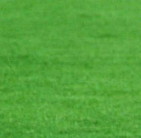 Fiorentina-Catania: diretta tv e streaming live