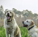Dottordog: assicura il tuo can