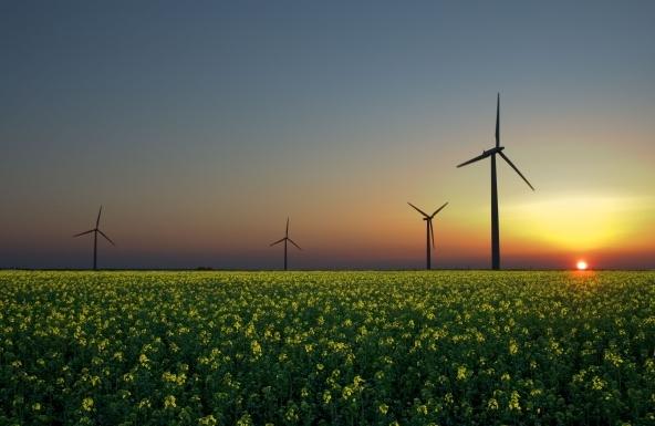 Amazon sceglie l'energia rinnovabile