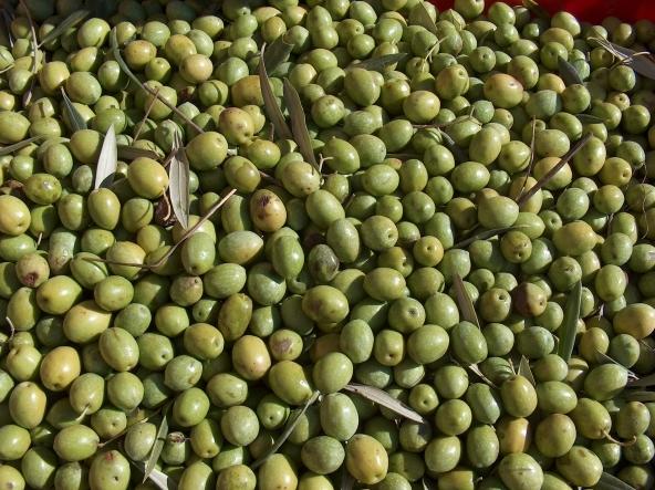 Energia alternativa dallo scarto delle olive