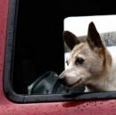 Animali domestici in auto: occhio al trasporto!