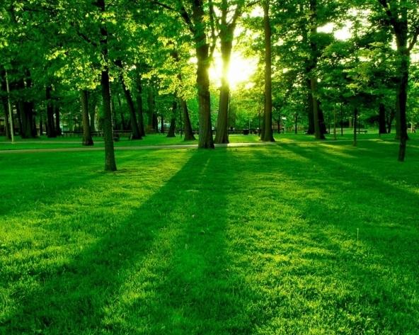 Classifica delle migliori app green