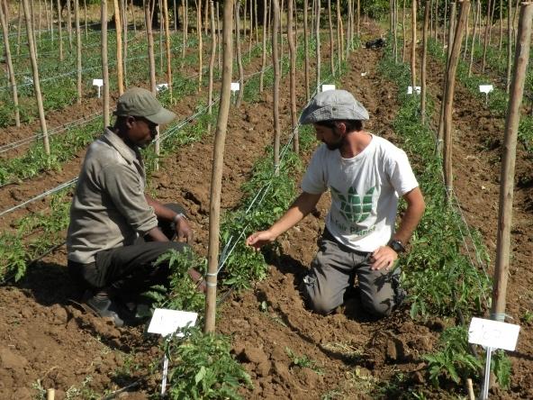Geotermia:per contrastare il problema della fame
