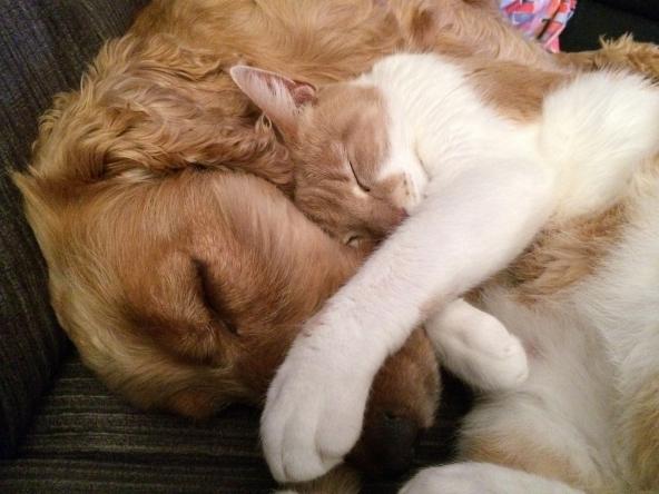 Proteggi i tuoi animali domestici con una polizza