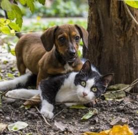 Come funzionano le assicurazioni sanitarie per animali domestici?