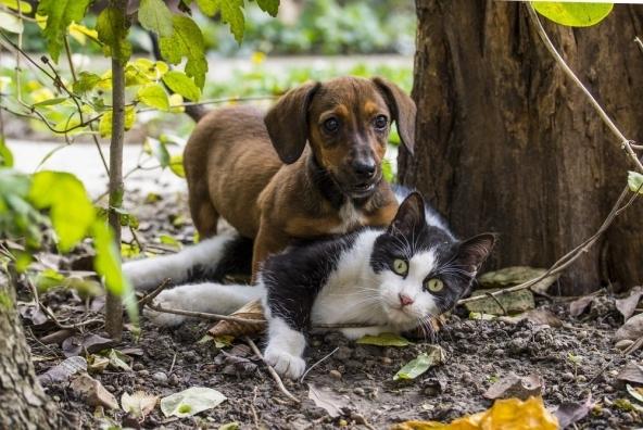 Assicurazioni animali domestici